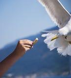 Voed de vogel Royalty-vrije Stock Fotografie