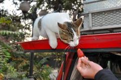 Voed niet de katten! , Santiago, Chili Royalty-vrije Stock Fotografie