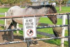 Voed Paarden het Posten niet stock foto