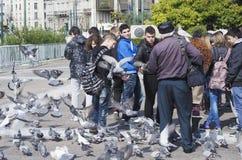 Voedende duiven in Athene Stock Afbeeldingen