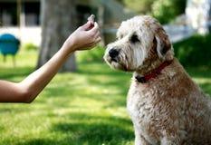 Voedende hond Stock Foto