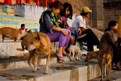 Voedende Honden stock afbeeldingen