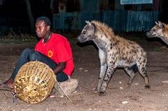 Voedende hyena's Royalty-vrije Stock Afbeelding