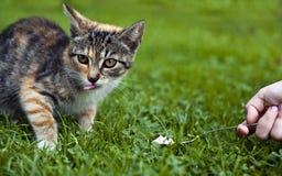 Voedende kat Stock Afbeeldingen