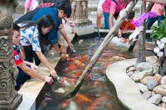 Voedende Koi-vissen met melkfles in landbouwbedrijf Royalty-vrije Stock Foto's