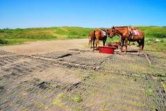 Voedende paarden royalty-vrije stock foto's