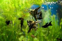 Voedende vissen Stock Foto's