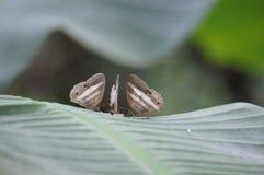 Voedende Vlinders royalty-vrije stock afbeelding
