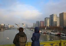 Voedende zeemeeuwen in Parijs Royalty-vrije Stock Foto's