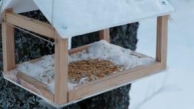 Voeder van de close-up de houten vogel op de boom in bospark stock footage