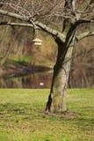 Voeder voor vogels Stock Foto