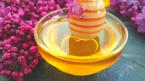 Voeding van de de bloesem langzame motie van de honings lilac bloem smakelijke op zwarte concrete achtergrond, samenstelling stock videobeelden