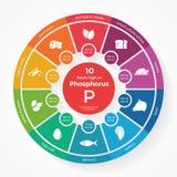 10 voedsel hoog in Fosfor stock illustratie