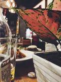 voedsel met installaties Stock Fotografie