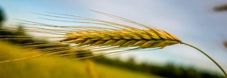 Voedsel voor oogst royalty-vrije stock afbeelding