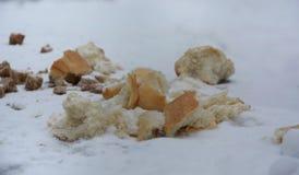 Voedsel voor vogels Het helpen van het voedsel van de vogelsvangst in de winter royalty-vrije stock afbeelding