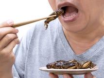 Voedselinsecten: Mens die Veenmolinsect op eetstokjes eten Gefrituurd veenmollen de knapperig voor eten als voedselsnack, is het  royalty-vrije stock foto