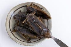 Voedselinsecten: Reuzewaterinsect voor het eten als voedsel Insectpunten die gefrituurde snack op plaat met vork op witte achterg royalty-vrije stock afbeeldingen