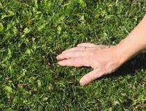 Voel het hand groene gazon Royalty-vrije Stock Fotografie