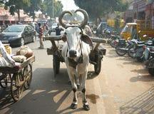 voertuigen op straten van Jaipur, Rajasthan, India Stock Foto's