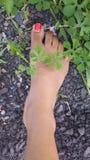 voet Stock Afbeelding
