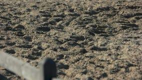 Voet die van paard op het zand lopen stock video