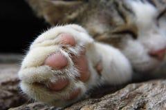 Voet kattenslaap stock afbeeldingen