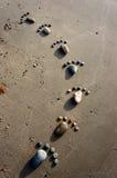 Voet, kiezelsteen, zand, kunst, strand Stock Afbeeldingen