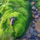 Voet, kiezelsteen, zeewier, kunst, kust Stock Foto's