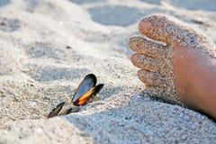 Voet met shells op zand Royalty-vrije Stock Foto's