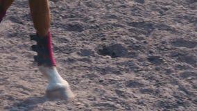 Voet van paard die langs het zand bij het opleidingsgebied ter plaatse lopen, close-up van paardbenen, langzame motie stock video