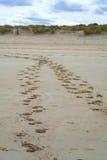 Voetafdruk in het zand Stock Foto's