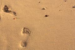 Voetafdruk in het zand Stock Foto