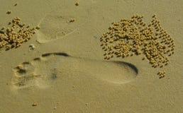 Voetafdruk op Australisch strand Stock Afbeelding