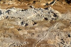 Voetafdruk op modder Stock Afbeelding