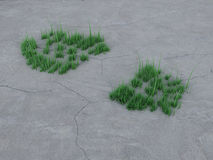 Voetafdruk op steen en gras. Stock Afbeeldingen
