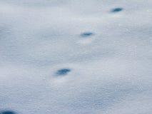 Voetafdruk in sneeuw Stock Foto's
