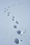 Voetafdrukken in de sneeuw Royalty-vrije Stock Afbeeldingen