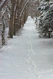 Voetafdrukken in de Sneeuw stock foto's