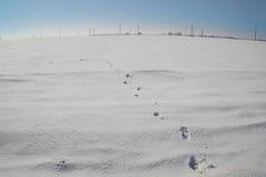 Voetafdrukken in de sneeuw en de blauwe hemel Royalty-vrije Stock Afbeelding