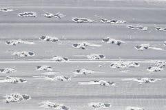 Voetafdrukken in de sneeuw royalty-vrije stock foto