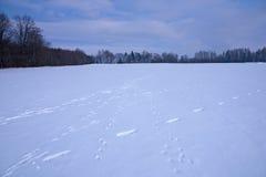 Voetafdrukken in de winterlandschap Royalty-vrije Stock Foto's