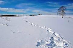 Voetafdrukken in diepe sneeuw en een boom op horizon Royalty-vrije Stock Foto