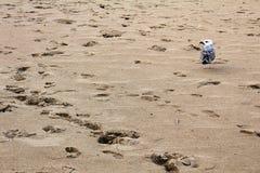 Voetafdrukken en zeemeeuw op het zandige strand op de kust van de Zwarte Zee in Obzor, Bulgarije Stock Foto