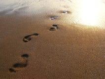 Voetafdrukken in het natte zand Stock Afbeeldingen