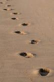 Voetafdrukken in het zand Royalty-vrije Stock Foto