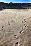 Voetafdrukken in het zand in Cabo DE Gata, Almeria stock foto's