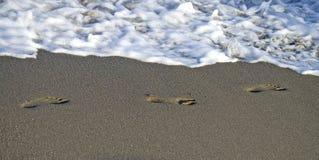 Voetafdrukken in het zand op het strand royalty-vrije stock foto