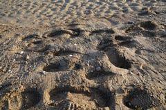 Voetafdrukken in het zand van het strand Royalty-vrije Stock Foto