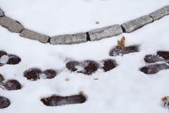 Voetafdrukken op de sneeuw Stock Foto's